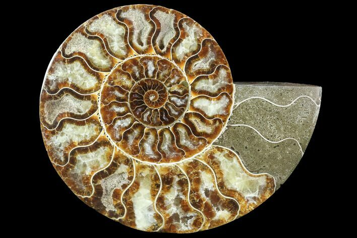 "6"" Agatized Ammonite Fossil (Half) - Crystal Chambers"