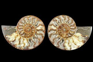 "Buy 5.4"" Cut & Polished Ammonite Fossil - Agatized - #88429"