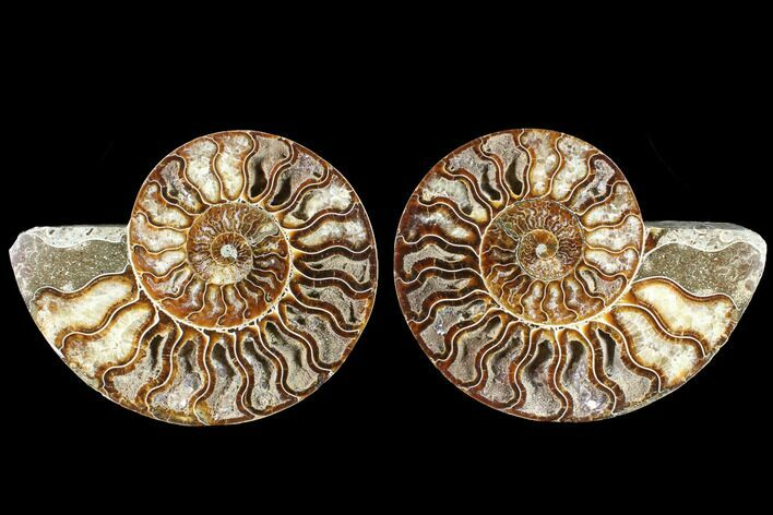 "5.8"" Cut & Polished Ammonite Fossil - Agatized"