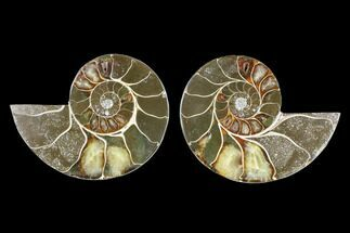 "4"" Cut & Polished Ammonite (Anapuzosia?) Pair - Madagascar For Sale, #88004"