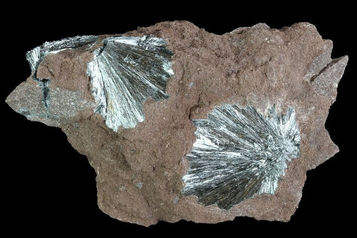 "3.9"" Metallic, Needle-Like Pyrolusite Cystals - Morocco"