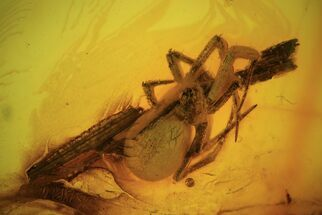 Detailed Fossil Spider (Aranea) In Baltic Amber For Sale, #90863