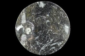 "4.2"" Round Fossil Goniatite Dish For Sale, #91502"