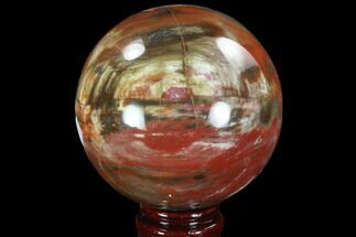 "Buy Bargain, 3.7"" Colorful Petrified Wood Sphere - Madagascar - #92995"