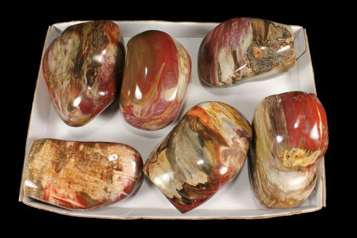 Wholesale Lot: 25 Lbs Polished Petrified Wood Sculptures - 6 Pieces