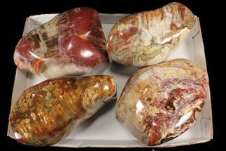 Buy Wholesale Lot: 37+ Lbs Polished Petrified Wood - 4 Pieces - #92428