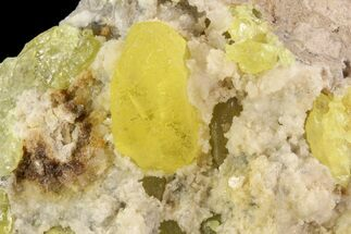 "Buy 3.1"" Sulfur Crystals in Matrix - Italy - #93646"