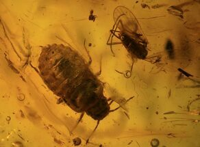 Fossil Flies (Diptera) & Aphid (Hemiptera) In Baltic Amber For Sale, #93842