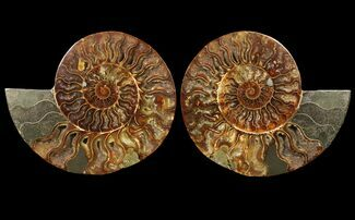"Buy 8.2"" Cut & Polished Ammonite Fossil - Agatized - #94195"