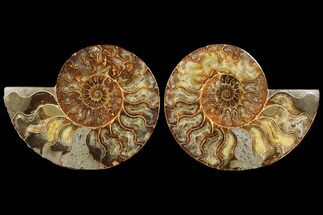 "7.2"" Cut & Polished Ammonite Fossil - Agatized For Sale, #94199"