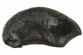Whale (Unknown Species) - Fossils For Sale - #95739