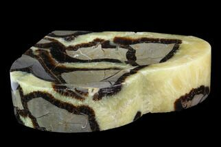Septarian - Fossils For Sale - #96084