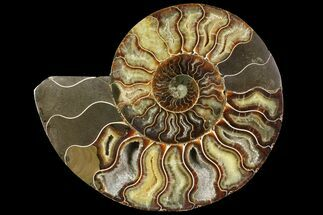 "Buy 7.25"" Cut Ammonite Fossil (Half) - Agatized - #97762"