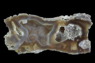 "2.9"" Agatized Fossil Coral With Druzy Quartz - Florida For Sale, #97922"