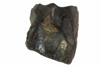 Triceratops horridus - Fossils For Sale - #98331