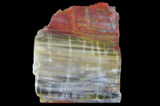 "Buy 8.1"" Wide, Polished Petrified Wood Slab - Arizona - #98404"