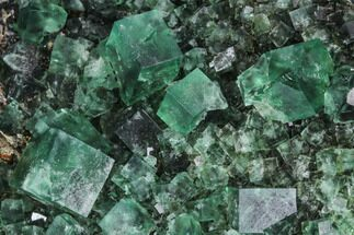 Fluorite  - Fossils For Sale - #99456