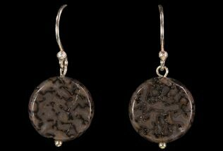 Polished Fossil Dinosaur Bone (Gembone) Earrings For Sale, #93350