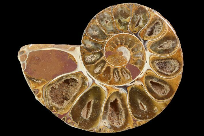 "3.4"" Sliced, Agatized Ammonite Fossil (Half) - Jurassic"