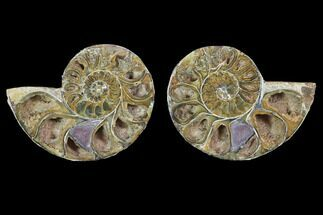 "Buy 3.2"" Cut & Polished, Agatized Ammonite Fossil - Jurassic - #100516"
