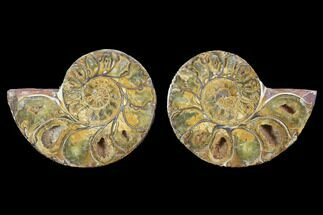 "3.5"" Cut & Polished, Agatized Ammonite Fossil - Jurassic For Sale, #100526"