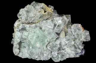 "Buy 2.4"" Green Fluorite Crystal Cluster - Mongolia - #100735"