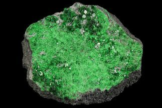 Uvarovite - Fossils For Sale - #100818