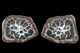 Septarian - Fossils For Sale - #101190