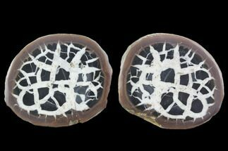 "3"" Cut/Polished Septarian Nodule Pair - Morocco  For Sale, #101192"