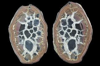 "3.7"" Cut/Polished Septarian Nodule Pair - Morocco For Sale, #101195"