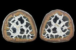 "Buy 3"" Cut/Polished Septarian Nodule Pair - Morocco  - #101197"