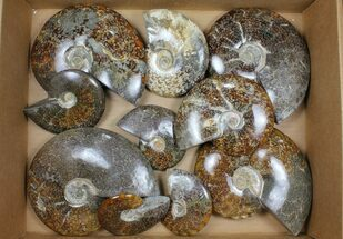 Unidentified - Fossils For Sale - #101601
