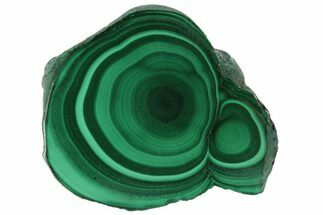 "1.2"" Polished Malachite Stalactite Slice - Congo For Sale, #101948"