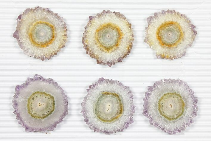 "Wholesale: ~1.5"" Amethyst Stalactite Slices (6 Pieces)"
