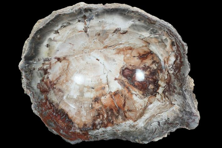"8.5"" Colorful Polished Petrified Wood Dish - Madagascar"