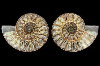 "4.45"" Cut & Polished Ammonite Fossil - Agatized For Sale, #103082"