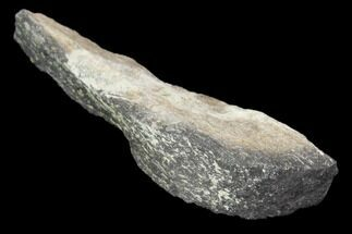"Buy 1.8"" Hadrosaur Bone Fragment - Montana - #103183"