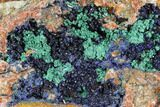 "6.8"" Large Malachite with Azurite Specimen (6.7 Lbs) - Morocco - #104071-2"