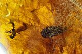 "1.3""  Polished Fossil Amber With Insect Inclusion (7 grams) - Mexico - #104278-1"
