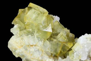 "2.7"" Lustrous, Yellow, Cubic Fluorite Crystal Cluster - Morocco For Sale, #104603"