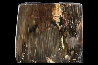 "5.8"" Petrified Wood (Araucioxylon) - Circle Cliffs, Utah For Sale, #104657"