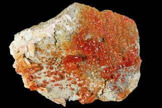 "5.8"" Ruby Red Vanadinite Crystals With Barite - Morocco For Sale, #104741"