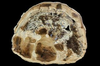 "8.2"" Petrified Wood (Cherry) Round - McDermitt, Oregon For Sale, #104918"