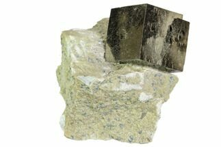 Pyrite - Fossils For Sale - #105405