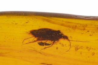 Cretaceous Fossil True Bug (Heteroptera) in Amber - Myanmar For Sale, #105824