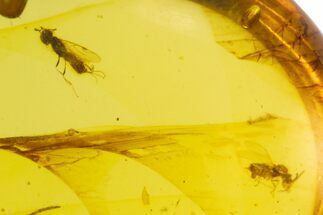 Buy Cretaceous Wasp & Bug in Amber - Myanmar - #105982