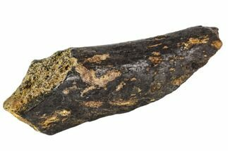 "2.0"" Fossil Synapsid Bone Fragment - Texas For Sale, #106994"