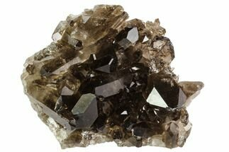 "Buy 2.6"" Dark Smoky Quartz Crystal Cluster - Brazil - #106963"