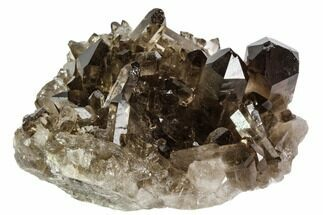 "2.7"" Dark Smoky Quartz Crystal Cluster - Brazil For Sale, #106964"