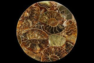 Various - Fossils For Sale - #107322